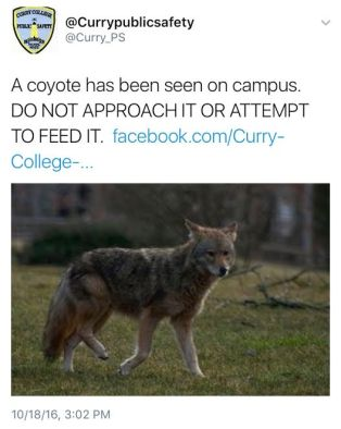 ps-coyote2